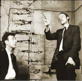 an analysis of the book the double helix by james d watson on the structure of dna molecules The original paper in nature, which announced the double helical structure of  dna, was co-authored by francis crick, and he and wilkins shared the nobel.