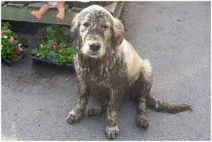 Your dirty dog? (Bing Images)
