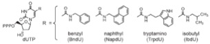 Modified nucleotides used in SOMAmer™ selection (taken from Technical Note on SomaLogics website)
