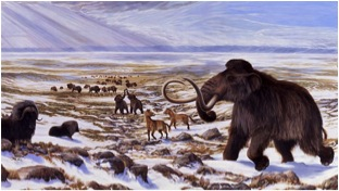 Woolly mammoths roamed both North America and Asia for hundreds of thousands of years. Many went extinct during the most recent period of global warming (taken from CBC News via Bing Images).