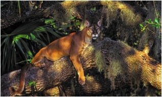 """Poster Child"" for facilitated adaption: an endangered Florida panther population was bolstered through hybridization with a related subspecies — a technique that could be refined using genomic tools (taken from Thomas et al. Nature 2013)."