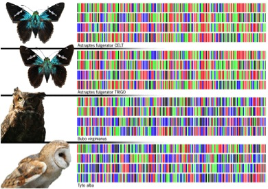 DNA barcodes identify all living things (taken from boomersinfokiosk.blogspot.com via Bing Images).
