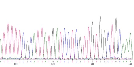 Four-color DNA sequencing trace showing sequence of T (red), C (blue), G (black), and A (green) bases that comprises a barcode and can be redrawn as depicted below (taken from srmgenetics.info via Bing Images).