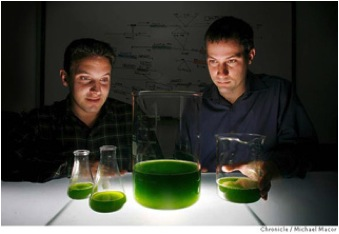 Jonathan Wolfson (left) and Harrison Dillon gaze into the future of algae. Credit : Chronicle/Michael Macor. Taken from cleantechrepublic.com via Bing Images.