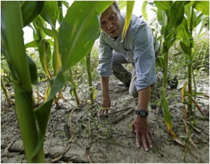 Environmentalist Craig Cox, above, says the push to plant corn for ethanol is damaging land and water. Photo: Charlie Riedel, Associated Press (taken from sfgate.com).