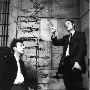 Metal working model used by James Watson and Francis Crick to determine the double-helical structure of the DNA molecule in 1953 (taken from lebbeuswoods.wordpress.com via Bing Images).