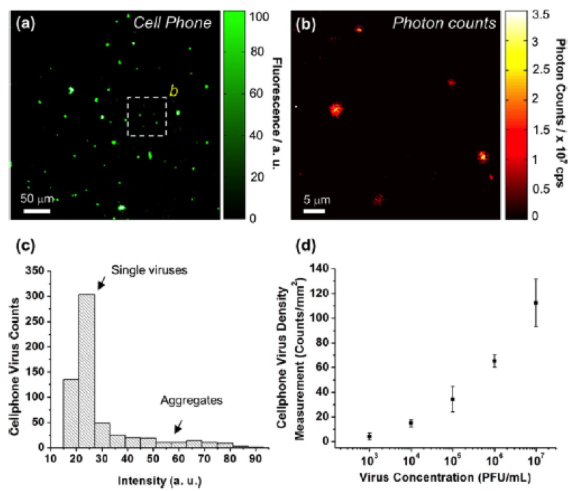 (a) Cell phone image of fluorescently labeled HCMV at a concentration of 107 PFU/mL. (b) Photon-counting map for dashed area in (a) using a confocal laser microscope. Note that absolute photon counts are different. (c) Distribution of intensity of HCMV in cell phone images. (d) Cell-phone-based virus density vs. virus incubation concentrations [taken from Wei et al. ACS Nano (2013)].