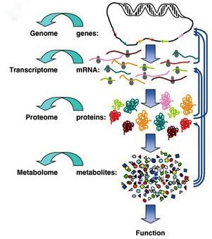 Schematic of the 'omic hierarchy: genomics, transcriptomics, proteomics, and metabolomics—yes, the figure leaves out a few others, e.g. epigenomics and phenomics (taken from schaechter.asmblog.org via Bing Images).