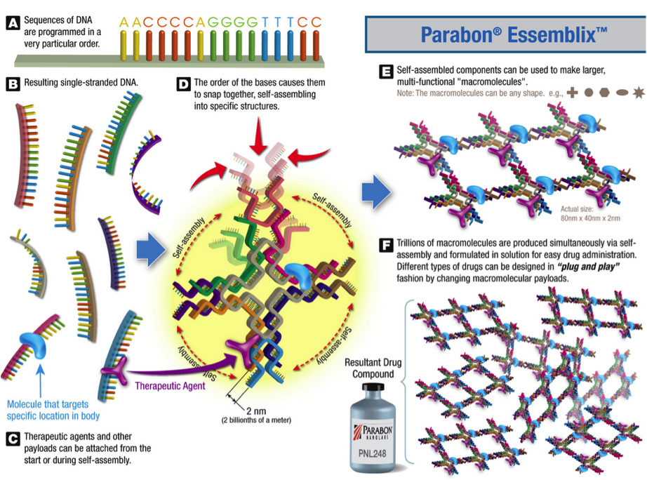Parabon Essemblix process (credit: Parabon NanoLabs)