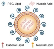Simplified cartoon of Tekmira's lipid nanoparticles (LNPs) formulations of siRNA (taken from an interview with Ian MacLachlan in GEN via Bing Images).