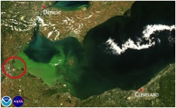 Satellite image of 2013 intense bloom concentrated in the western basin of Lake Erie. (MODIS/NASA, processed by NOAA/NOS/NCCOS)