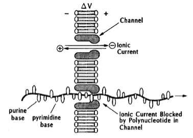 Cartoon depicting nanopore sequencing of DNA in US patent 5,795,782.