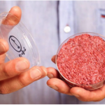 "Synthetic beef that's truly a ""burger in a Petri dish."" Taken from theguardian.com."
