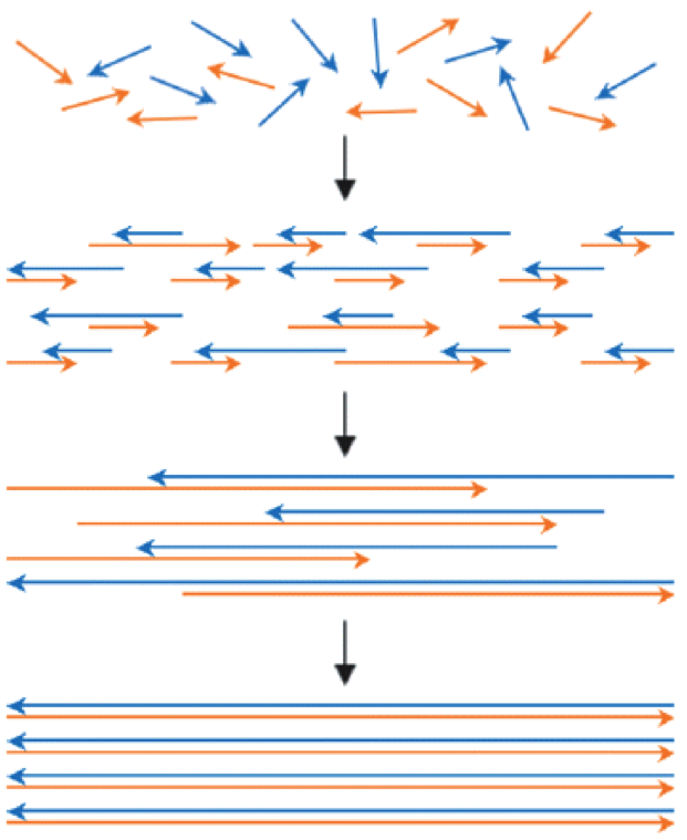Gene synthesis by polymerase construction and amplification (PCA) wherein multiple rounds of oligo annealing and extension generate successively longer DNA assemblies from a starting pool of construction oligos, typically <50-mers. The pool of heterogeneous DNA products is enriched for the full-length species by amplification in a separate subsequent reaction, or in the same reaction by including amplifying primers in the reaction mixture. Taken from Jacobson and coworkers NAR (2007).
