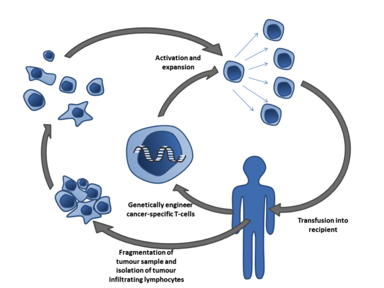 Cancer specific T-cells can be obtained by fragmentation and isolation of tumor infiltrating lymphocytes, or by genetically engineering cells from peripheral blood. The cells are activated and grown prior to transfusion into the recipient (tumor bearer). Taken from Wikipedia.org