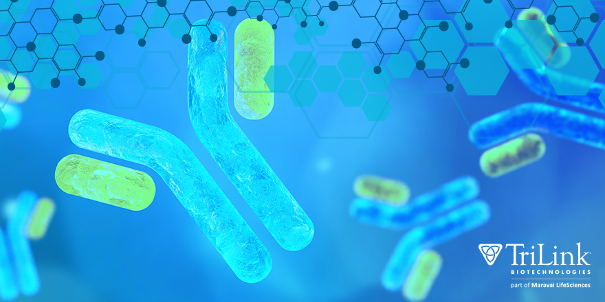 Zone in With Zon - What's Trending in Nucleic Acid ResearchZone in